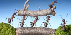 Maximizing Team-Power